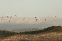 Swan10